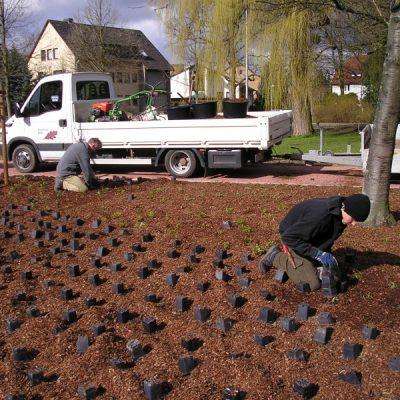 Pflanzung im öffentlichen Grün.