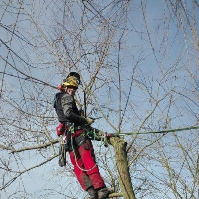 Baumfällung durch Abtragung